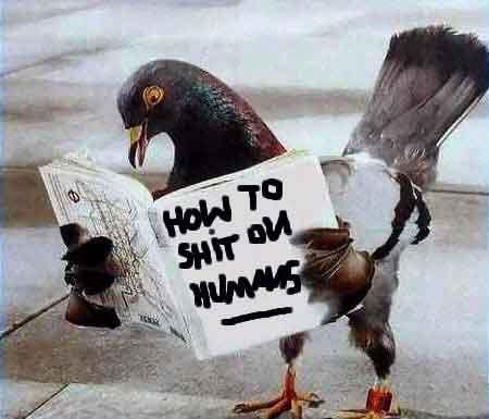 050531_pigeons